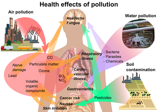Pollutants have a variety of health impacts