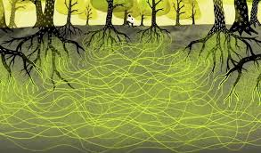 Wood-wide Web