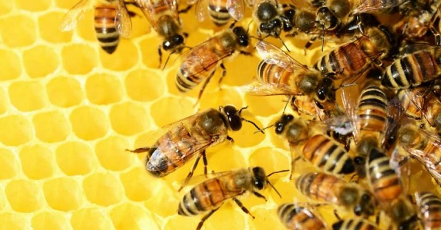 Beekeepers in the US lost 40% of their colonies in the past year raising concerns about the effects of pesticides