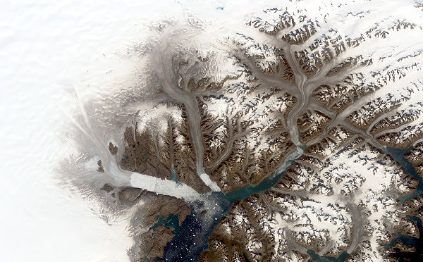 Glaciers in southeastern Greenland including, from left, Helheim, Fenris and Midgard are seen in a Landsat 8 image from Aug. 12, 2019. The glaciers appear brownish grey, which indicates that the surface has melted.