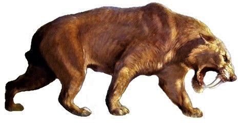 Smilodon populator--one of North America's Pliocene saber-toothed cats, From InText