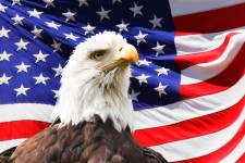 American Flag with Eagle, From InText